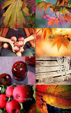 An Autumn Poem: After Apple Picking - Robert Frost by Linda Voth on Etsy--Pinned…