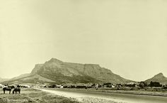 Cape Town travel guide, written by locals, read by everyone. Find out what's happening and what's good in this beautiful city today. Old Pictures, Old Photos, Vintage Photos, Cape Town South Africa, Whale Watching, African History, Live, Night Life, Places To See