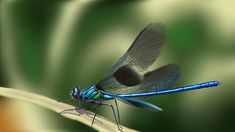 Dragonfly and damselfly Dragonfly Photos, Dragonfly Wings, Fun Projects For Kids, Painted Rocks Kids, Rock Painting Ideas Easy, San Diego Zoo, Beach Stones, Painting Videos, Walking In Nature