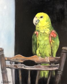 SWEETPEA'S CHAIR 10 X 8 Oil on hardboard  My 30 year old parrot.
