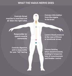 Unlock the Power of the Vagus Nerve to Reduce Chronic Stress fibromyalgia pain Relief Chronischer Stress, Emotional Stress, Chronic Stress, Chronic Pain, Fibromyalgia Pain, Stress Control, Hernia, Craniosacral Therapy, Trauma Therapy