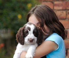 Det er en god idé at tilrettelægge din ny hundehvalps hjemkomst således, at du kan være hjemme og give hundehvalpen den opmærksomhed, som den kræver i sta