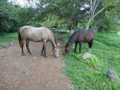 Yegua y caballo comiendo