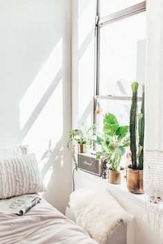 cacti in gold pots in nys window / sfgirlbybay
