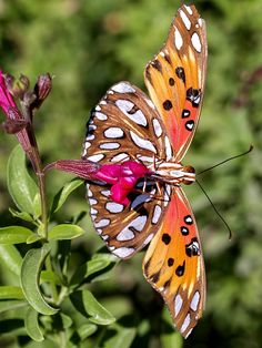 Colorful, Beautiful, Butterfly, Nature, Insect, Flower