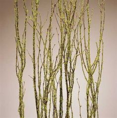 Younger and Son Wholesale  Birch Branches Mosscoat