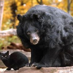 Bear and cat friend