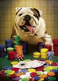 Poker like a bulldog? I barely know her like a bulldog.