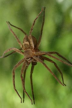Watch out for these venomous creatures when you play outdoors!