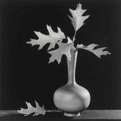 Robert Mapplethorpe, Leaves in Vase
