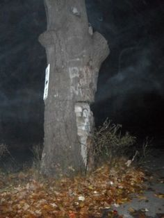 """One night while sharing stories of haunted places, a friend mentioned """"The Witch Tree"""" in Smithfield Rhode Island. This peaked my curiosity and I wanted to know everything about it. The tree is named after a suspected witch that had lived further down the road. The only thing that"""
