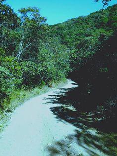 Caminho Sinuoso #Diana