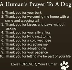 I love my Dogs, all dogs! All Dogs, I Love Dogs, Puppy Love, Dogs And Puppies, Cute Dogs, Doggies, Animal Quotes, Dog Quotes, Animals And Pets