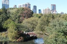 Central Park, an urban oasis, with Midtown and Upper West Side looming in background.
