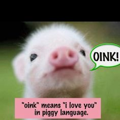 Piggy language :-)