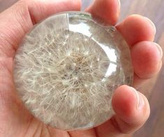 How To Make A Dandelion Globe These are quite possibly the most beautiful things I have seen in a ve