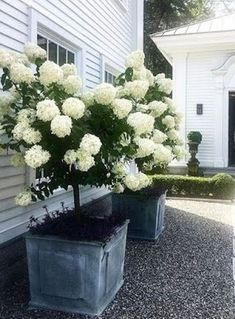 hydrangea garden care 48 Fresh And Beautiful Front Yard Landscaping Ideas Front House Landscaping, Farmhouse Landscaping, Landscaping With Rocks, Backyard Landscaping, Hydrangea Landscaping, Backyard Ideas, Landscaping Borders, Front Yard Patio, Porch