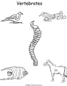 week 6 vertebrates coloring page