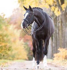 (77) I Love Horses - Photos