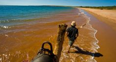 Camel travelling trough Australia