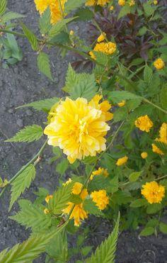 Flower ^^