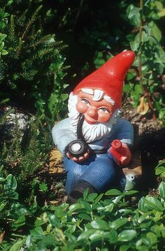 every garden needs a gnome right? :)