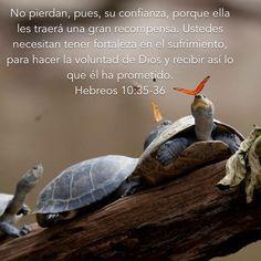 «Así que no pierdan la confianza, porque ésta será grandemente recompensada. Ustedes necesitan perseverar para que, después de haber cumplido la voluntad de Dios, reciban lo que él ha prometido.» Hebreos 10:35-36 