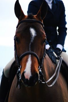 OMGoodness! This horse has such a cute face, love his blaze!!