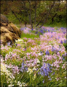 Spring Wildflowers, Victoria, British Columbia, Canada
