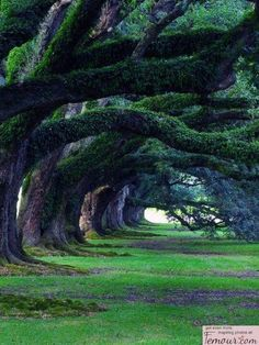 The enchanted woods - they look like they are bowing