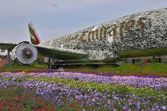 #emirates #airline #aeroplane #emiratesairline #flower #dubaimiraclegarden #hdr Miracle Garden, Emirates Airline, Hdr, Opera House, Dubai, Tower, Instagram Posts, Travel, Rook