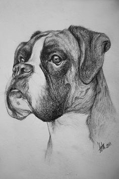 """Receive wonderful ideas on """"Boxer Dogs"""". They are actually readily available for you on our site. Animal Sketches, Animal Drawings, Art Sketches, Art Drawings, Drawings Of Dogs, Boxer Dog Tattoo, Dog Pencil Drawing, Pencil Art, Pencil Drawings"""