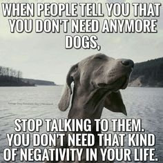 Have you at any point asked yourself why your dog gets so happy and full of energy when you return home? We miss our pets when we're away. Funny Animal Memes, Funny Animals, Cute Animals, I Love Dogs, Puppy Love, Cute Dogs, Dog Quotes, Animal Quotes, Weimaraner Puppies