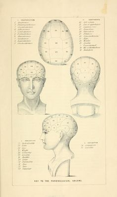 Vintage Ephemera: anatomy