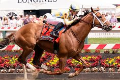 Hall of Fame powers needed with Noble Bird Thoroughbred Horse, Horse Racing, New Art, Horses, Bird, Animals, Animales, Animaux, Horse