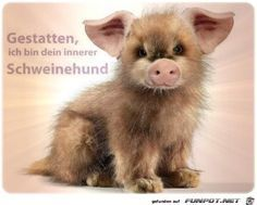 Eine von 14329 Dateien in de… funny picture & # allow.jpg & # from MatteMax. One of 14329 files in the category & # funny pictures & # on FUNPOT. Animals And Pets, Baby Animals, Funny Animals, Cute Animals, Cool Pictures, Funny Pictures, K Om, Sport Inspiration, Facebook Humor