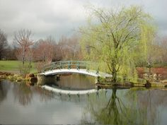 Early Spring beauty at Cox Arboretum MetroParks.