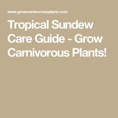 Tropical Sundew Care Guide - Grow Carnivorous Plants!