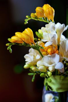 I want to be surrounded with beauty. Flowers -beautiful buildings-landscapes-anything that catches my eye. Fresia Flower, Flower Vases, Flower Art, Special Flowers, Wonderful Flowers, Beautiful Flowers, Freesia Bouquet, Indoor Flowering Plants, Beautiful Flower Arrangements