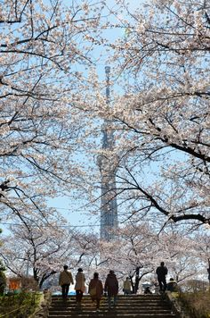 Tokyo Cherry Blossoms Spots and Sakura Festivals to Feel the Spring! Harajuku Station, Tokyo Midtown, Shinjuku Gyoen, Roppongi Hills, Yoyogi Park, Japanese Festival, Tokyo Station, Sakura, Visit Japan