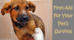 First Aid For Your Pet's Survival