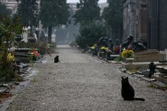 cemetery cats at milano cemetery | Flickr - Photo Sharing!