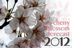 Updated 2012 #Japan cherry blossom forecast - including full bloom estimates.
