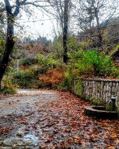 """173 """"Μου αρέσει!"""", 12 σχόλια - Evanthia Kaba (@evanthia_kaba) στο Instagram: """"#nature_pics #naturephotography #love_nature #nature #landscape #landscapephotography #mountain…"""" Land Scape, Country Roads, Nature, Instagram, Naturaleza, Nature Illustration, Off Grid, Natural"""