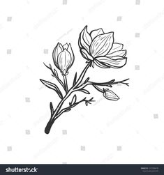 Find Beautiful Magnolia Branch Flowers Isolated On stock images in HD and millions of other royalty-free stock photos, illustrations and vectors in the Shutterstock collection. Thousands of new, high-quality pictures added every day. Magnolia Branch, Magnolia Flower, Flower Branch, Blooming Flowers, How To Draw Hands, Royalty Free Stock Photos, Black And White, Illustration, Artist