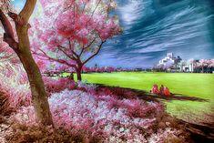 Infrared Photography, Human Eye, Gallery, Nature, Painting, Photos, Art, Art Background, Naturaleza
