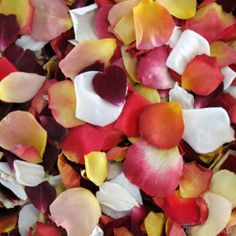 GrowersBox.com: Flowers: 3,000 Freeze Dried Rose Petals: Splendid Blend: Rose Petals $99.99