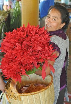 Woman With Flowers Mexico | This woman has bought an armload of poinsettia flowers to decorate her home altar. Oaxaca, Mexico.