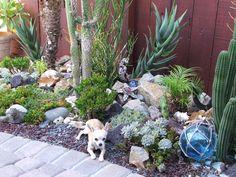 Succulent garden design lovely cactus in pots ideas succulent garden Garden Cactus, Rock Garden Plants, Tropical Garden, Shade Garden, Cactus Plants, Garden Great Ideas, Garden Inspiration, Succulent Landscaping, Front Yard Landscaping