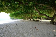 I'm going back soon.The Nomadic Pinoy: Talicud Island Davao, Pinoy, Philippines, Scenery, To Go, Island, Beach, Places, Water